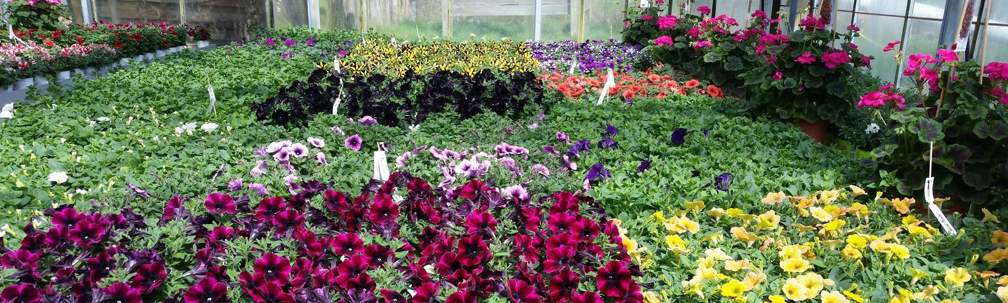Kramer Garten Ambiente Beet Und Balkonpflanzen